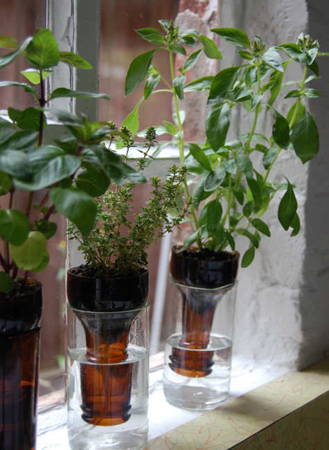Bottle Garden Ideas Pictures, Photos, and Images for Facebook ...