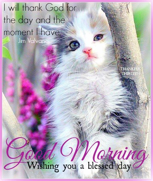 Good Morning Meme Blessed : Good morning wishing you a blessed day pictures photos