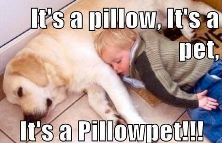 http://www.lovethispic.com/uploaded_images/186394-Its-A-Pillow-Pet-.jpg