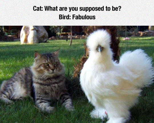 Chicken Pet Quote: Fabulous Bird Pictures, Photos, And Images For Facebook