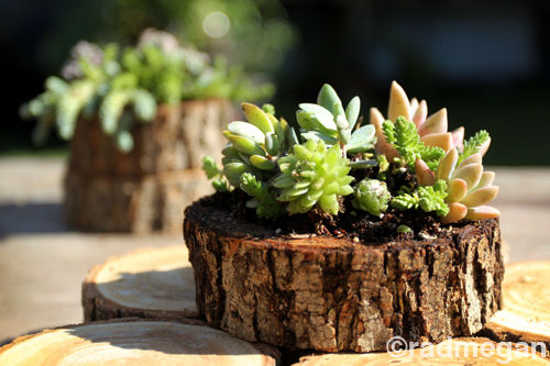 Sea Urchin And Wood Slice Succulent Planters Pictures