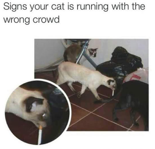 Cat Running With The Wrong Crowd Pictures, Photos, and ...