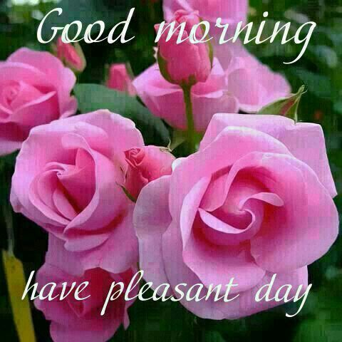 Good morning have a pleasant day pictures photos and - Good morning rose image ...