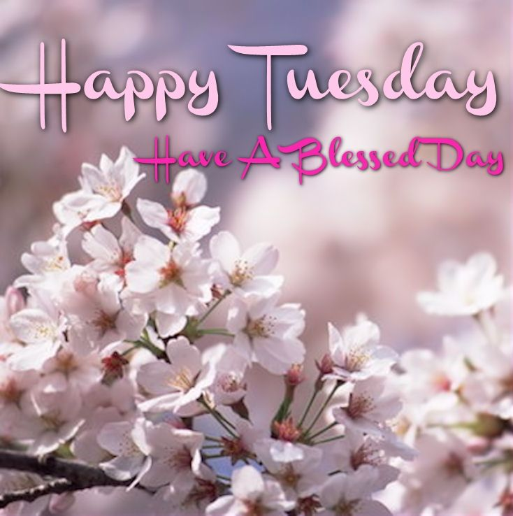 Happy Tuesday Have A Blessed Day Pictures, Photos, and