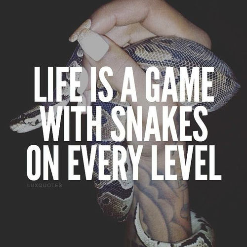 Life Is A Game With Snakes On Every Level Pictures Photos