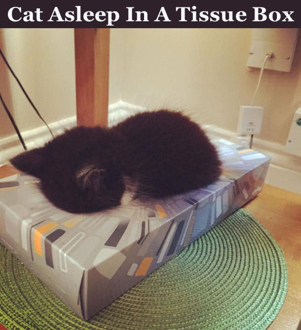 Image Result For Craft A Music Box