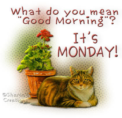 What do you mean good morning it 39 s monday pictures - Good morning monday images ...