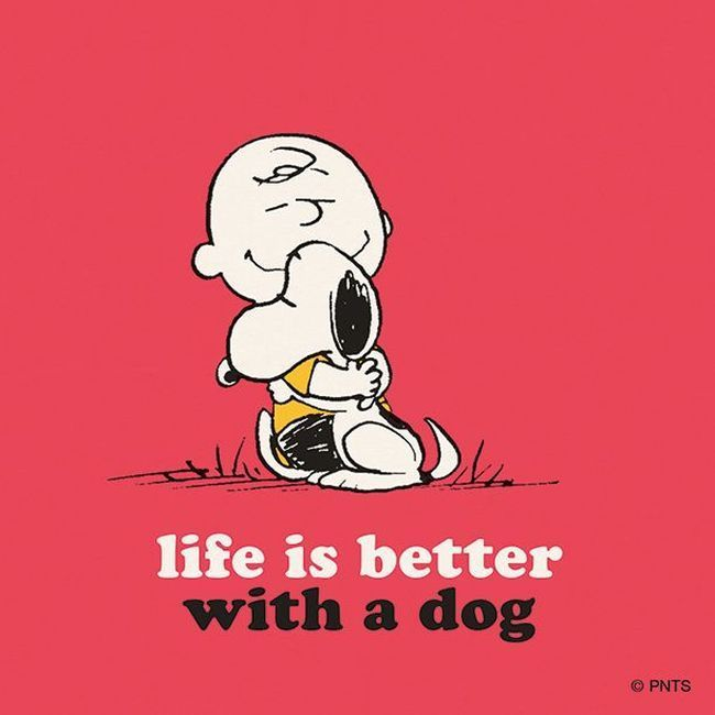e605e20271 Life Is Better With A Dog Pictures