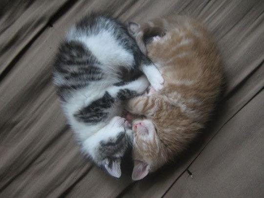 189987-Kitten-Heart-Hug.jpg