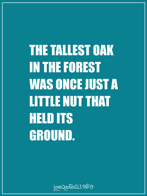 The Tallest Oak In The Forest Was Once Just A Little Nut