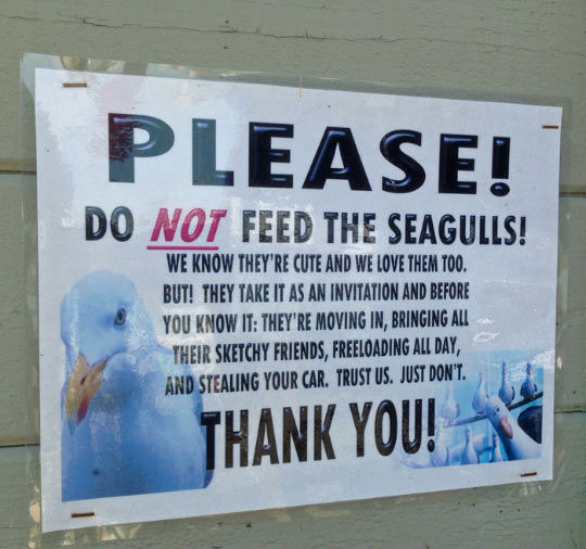 Do Not Feed The Seagulls Pictures Photos And Images For