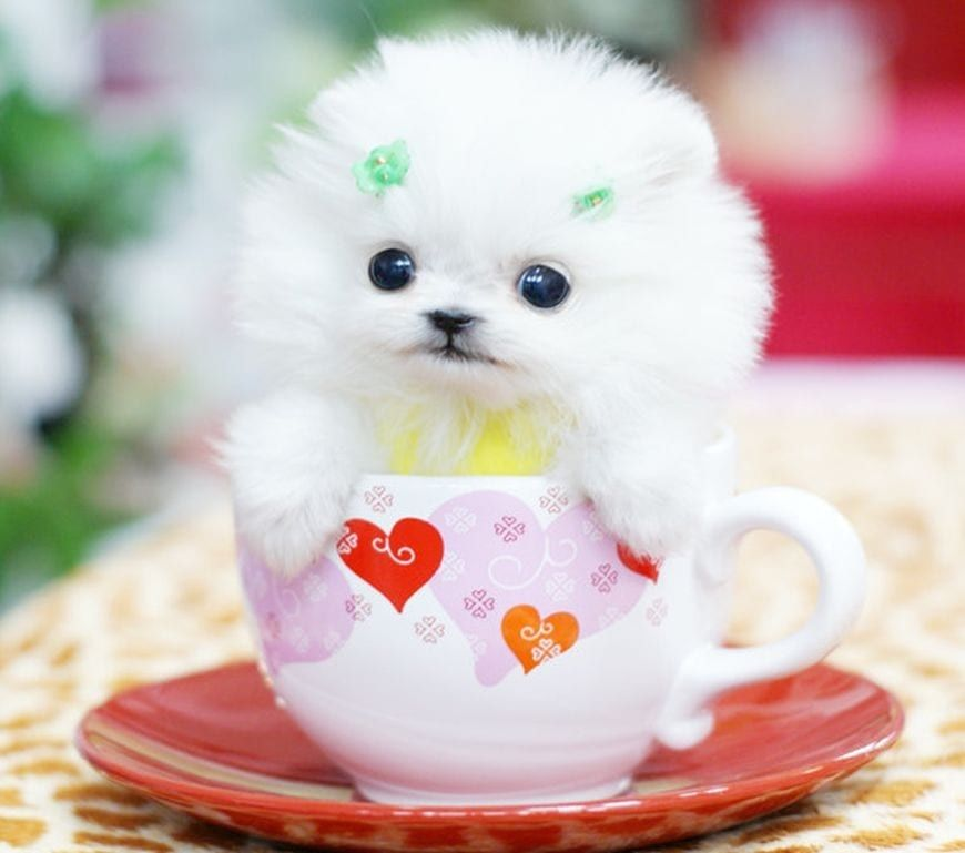 Cute Little Puppy Pictures Photos And Images For
