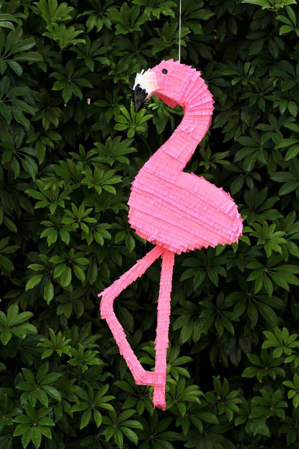 Flamingo Pinata Pictures Photos And Images For Facebook