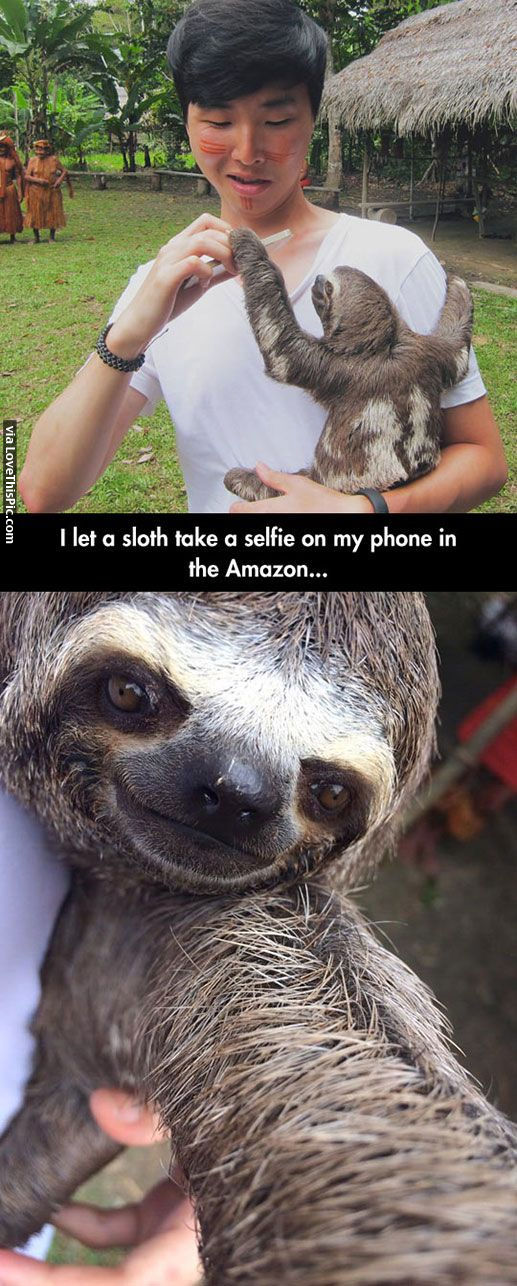 Sloth selfie pictures photos and images for facebook tumblr pinterest and twitter - Funny sloth pics ...