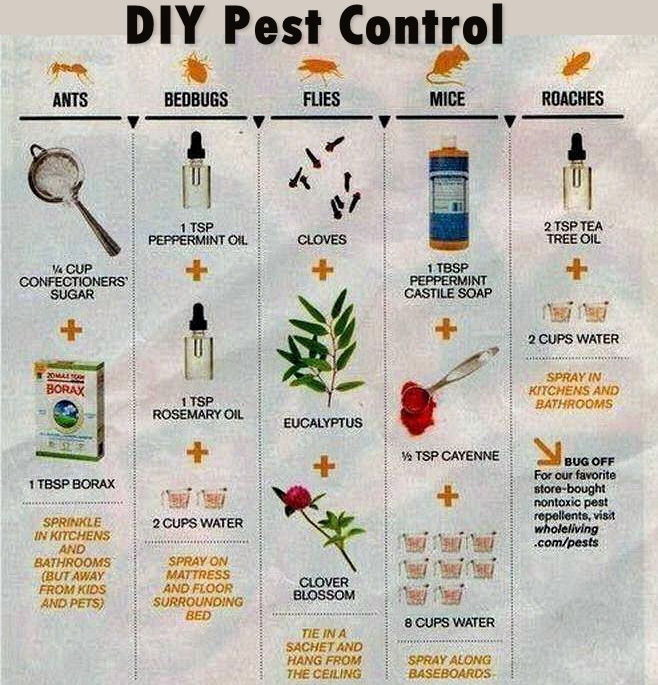 Diy pest control pictures photos and images for facebook tumblr diy pest control pictures photos and images for facebook tumblr pinterest and twitter solutioingenieria Gallery