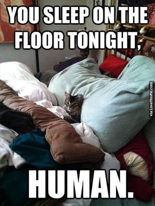 You sleep on the floor tonight human pictures photos for Is sleeping on the floor good