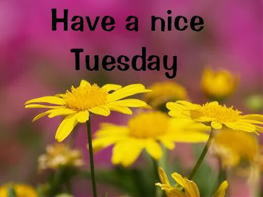 Image result for have a nice tuesday