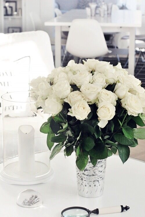 Chic White Roses Pictures Photos And Images For Facebook