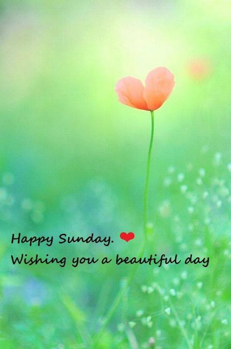 Good Morning And Happy Sunday Love Message : Happy sunday wishing you a beautiful day pictures photos