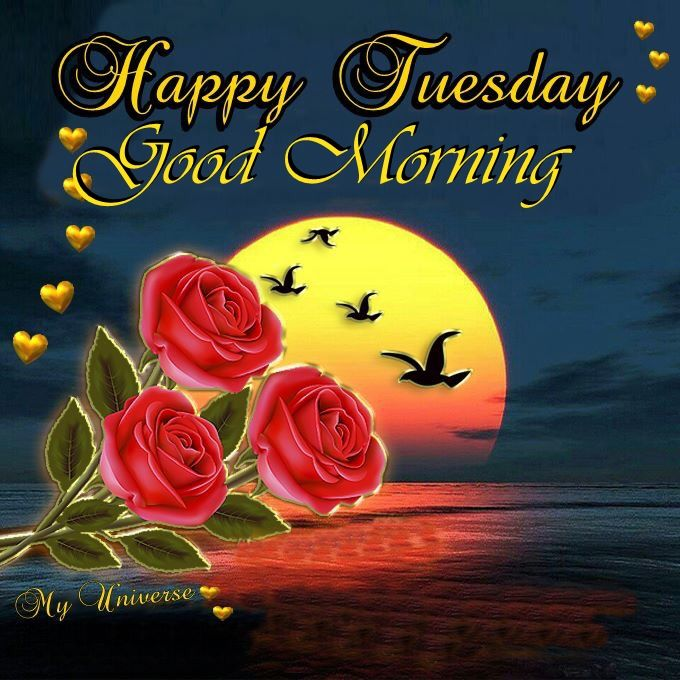 Happy Tuesday Good Morning Pictures, Photos, And Images