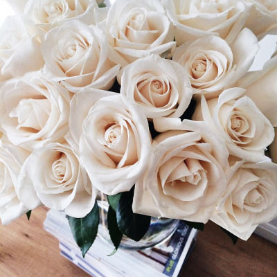 White roses pictures photos and images for facebook tumblr