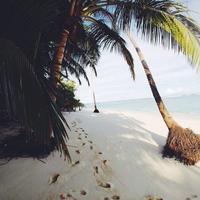 palm trees tumblr. Palm Trees Tumblr A
