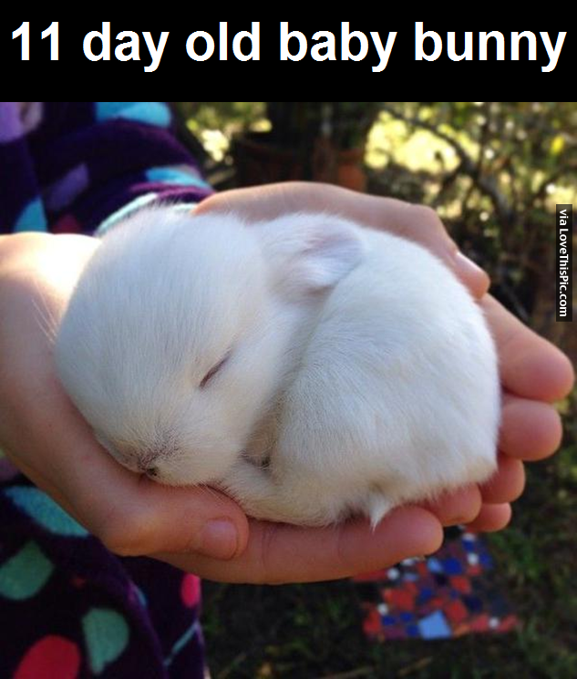 11 Day Old Baby Bunny Pictures, Photos, And Images For