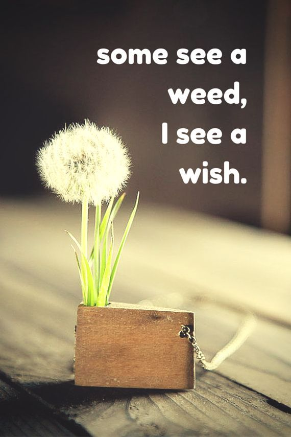 Some See A Weed, I See A Wish Pictures, Photos, and Images for ...