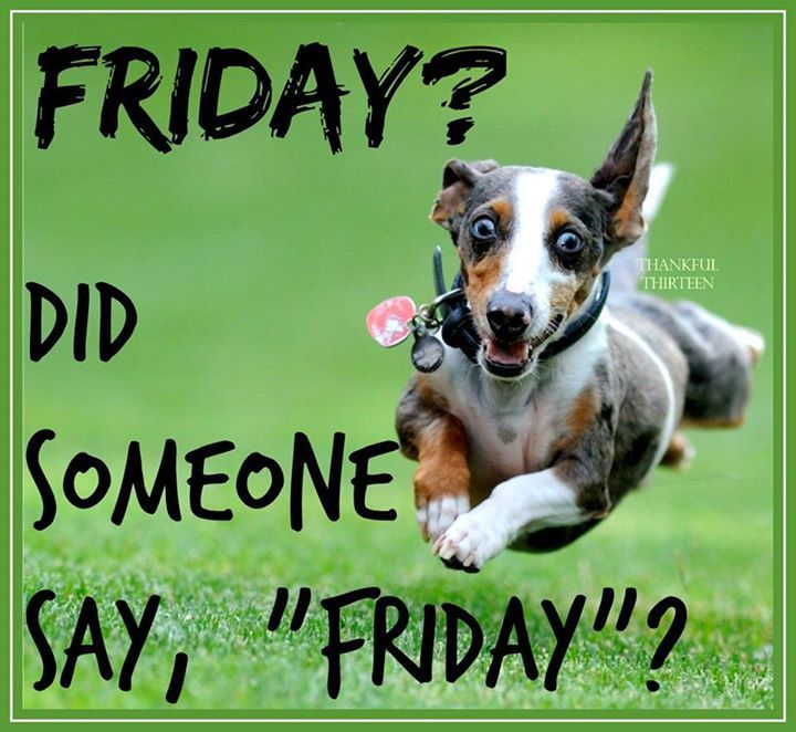Funny Pictures About Friday: Did Someone Say Friday Pictures, Photos, And Images For