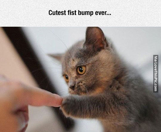 cutest fist bump ever pictures photos and images for