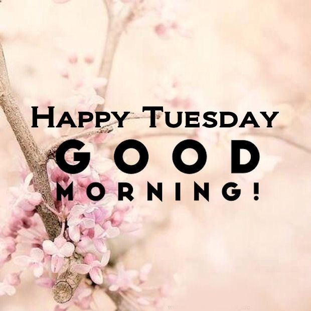 Good Morning Tuesday Images : Happy tuesday good morning pictures photos and images