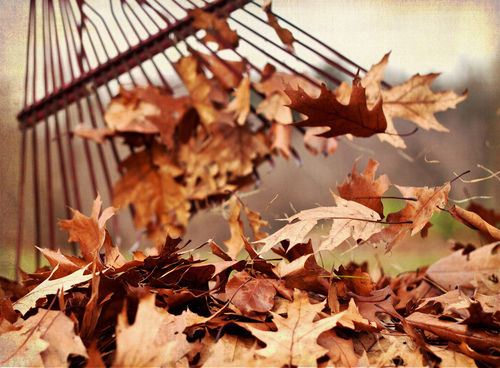 Raking Leaves Pictures Photos And Images For Facebook