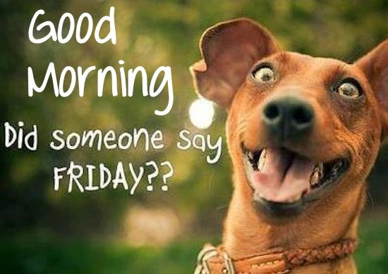 Image result for good morning friday funny