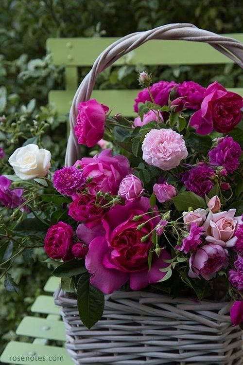 Basket Of Fresh Cut Purple Flowers Pictures, Photos, and ...