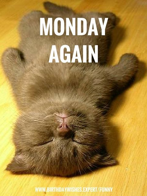 Monday Quotes Funny Amazing Funny Monday Cat Quote Pictures Photos And Images For Facebook