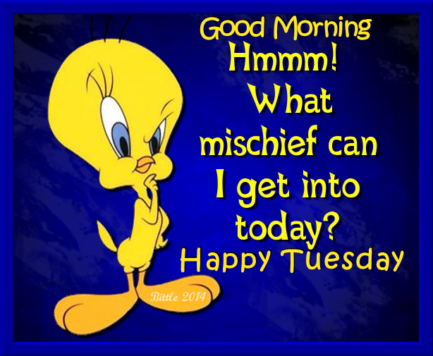 Tweety Bird Good Morning Happy Tuesday Pictures Photos And Images For Facebook Tumblr