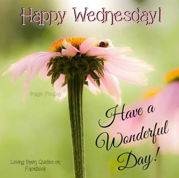 Happy Day Images And Quotes: Happy Wednesday Have A Wonderful Day Pictures, Photos, And