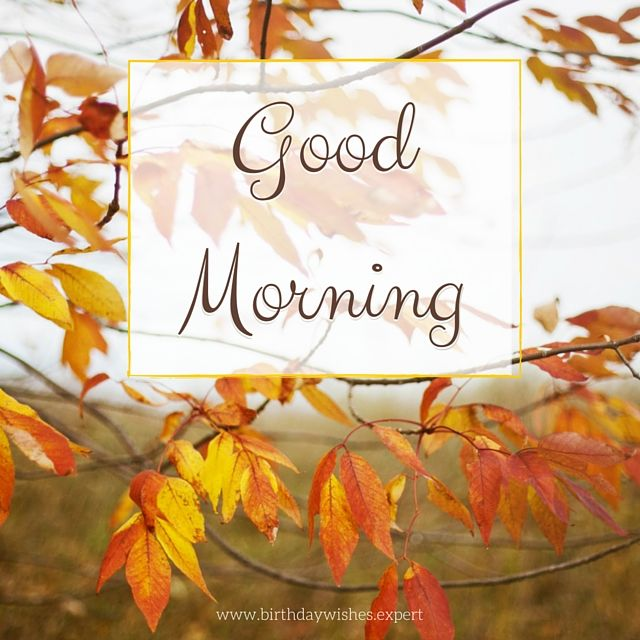 Good Morning With Autumn Leaves Pictures, Photos, And