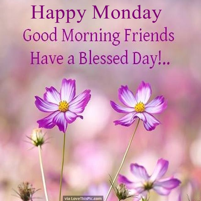 happy monday good morning friends pictures photos and