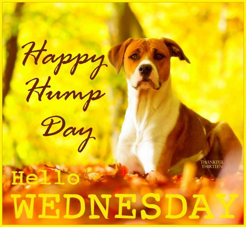 Happy Hump Day Hello Wednesday Pictures, Photos, and Images for
