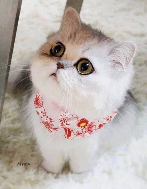 kitty galleries model Sweet