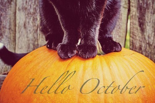 Black Cat And Pumpkin Hello October Quote