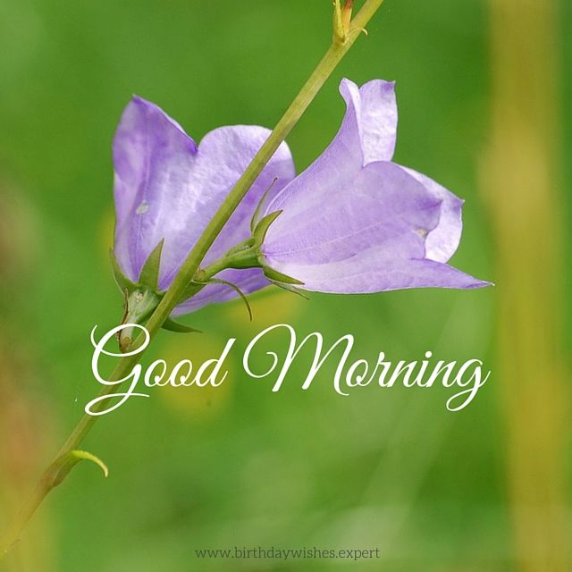 good morning image with purple flowers pictures, photos, and, Beautiful flower