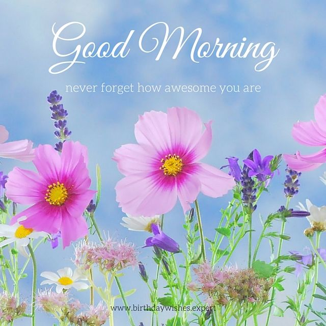 Good Morning Beautiful Flowers Pic : Good morning never forget how awesome you are pictures
