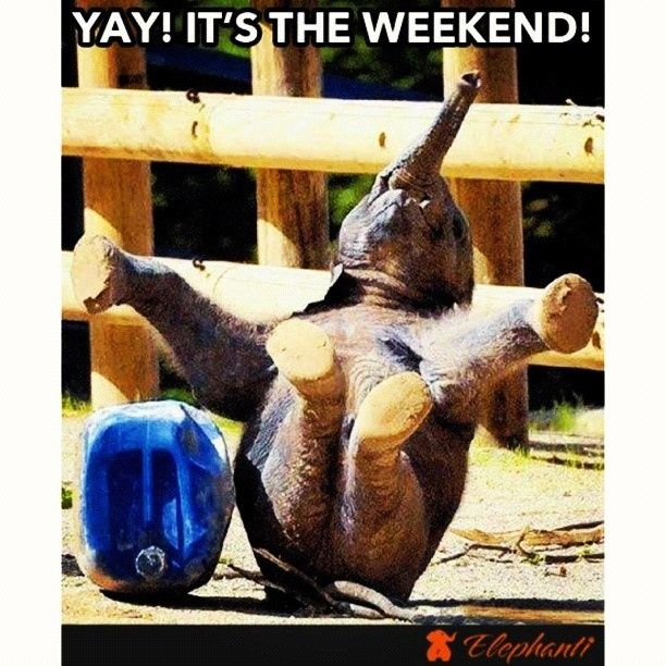 Yay It S The Weekend Pictures Photos And Images For
