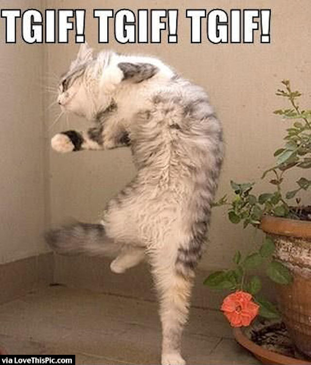 Funny Cat Tgif Meme Pictures Photos And Images For Facebook