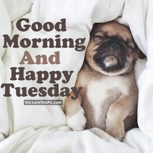 Good Morning And Happy Tuesday Pictures Photos And Images For