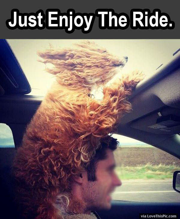 Dog Enjoying The Ride Pictures, Photos, and Images for ...