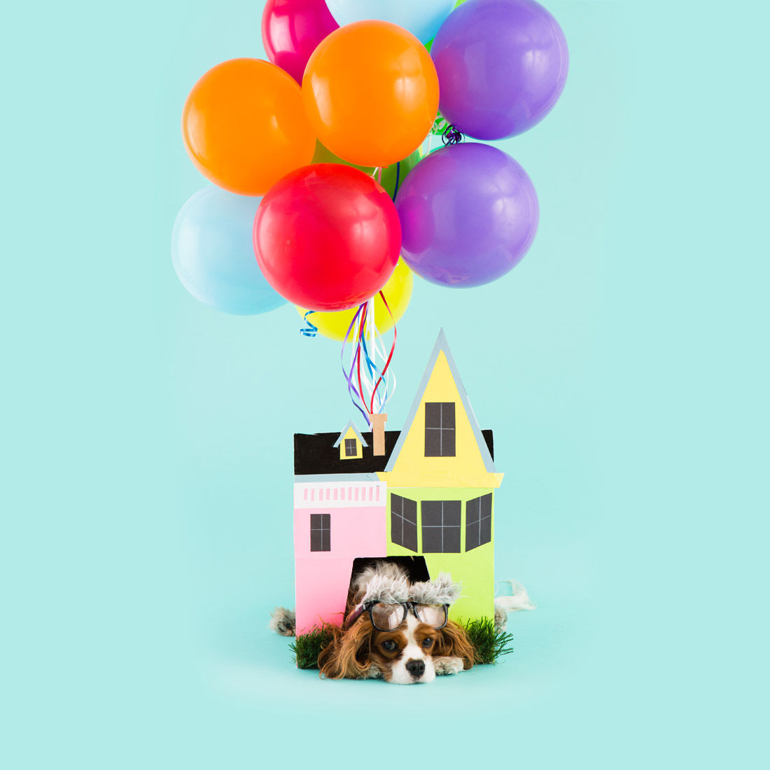 Up House Dog Costume  sc 1 st  LoveThisPic & Up House Dog Costume Pictures Photos and Images for Facebook ...