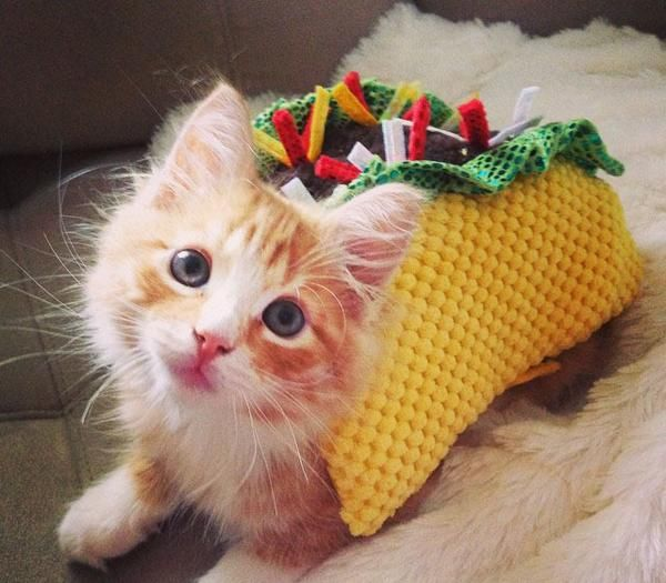 Baby Kitten Halloween Costumes